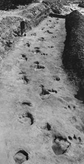 gianthumananddinosaurfootstepspaluxyriverglen