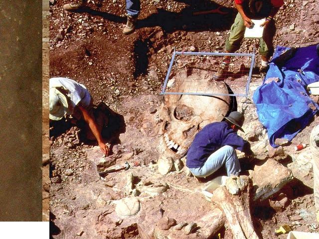 Opgraving van reuzenskelet.