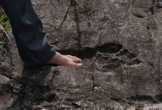 Een fossiel met een reuzen voetafdruk van 57 cm lang, 20 cm breed en 3 cm diep werd ontdekt in een rots in China's Guizhou.