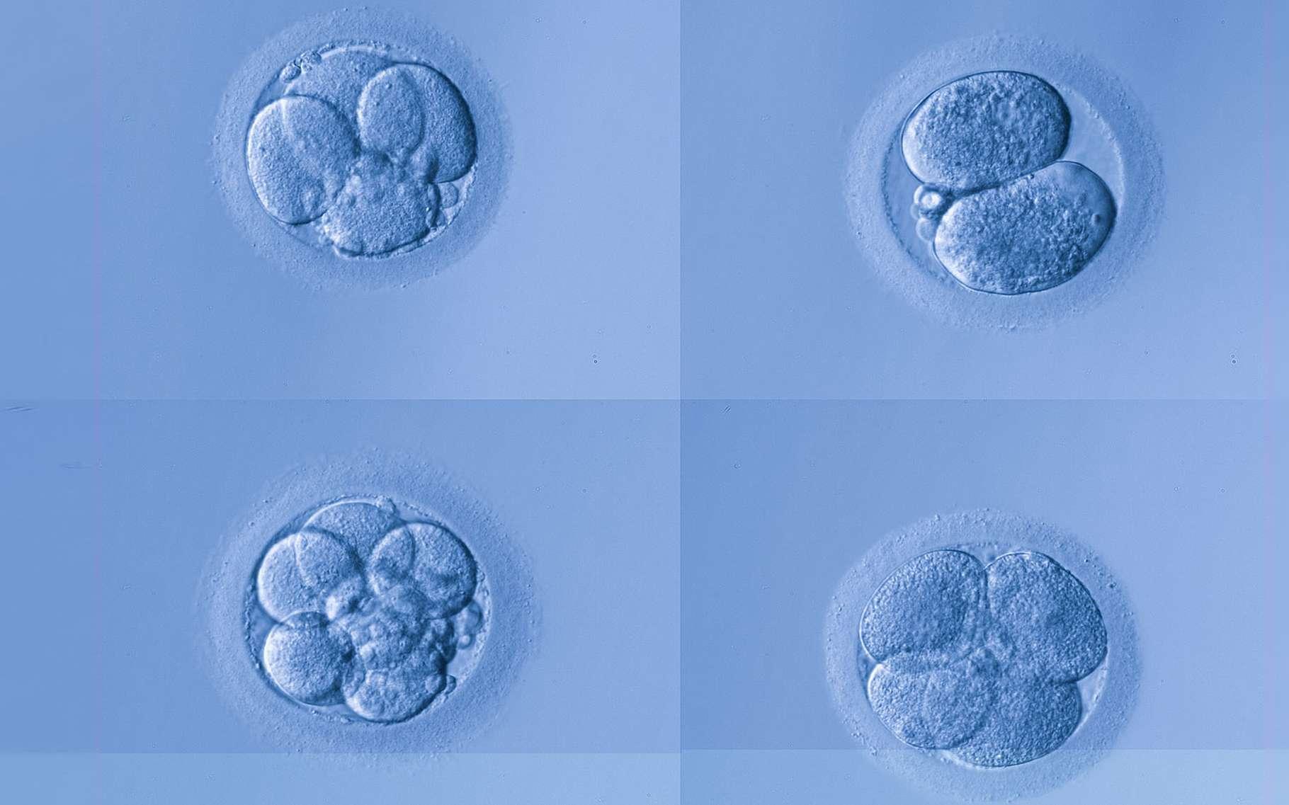 De wijze waarop materie wordt gecreëerd vertoont sterke gelijkenis met de wijze waarop een bevruchte eicel zich vermenigvuldigt
