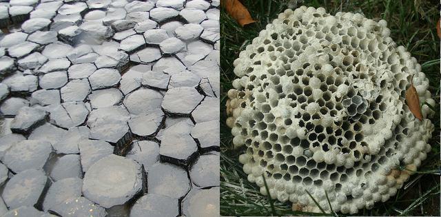 De pilaren hebben dezelfde structuur als een honingraat.