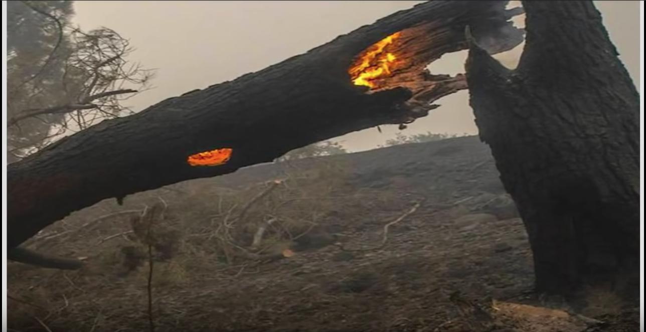 Bomen branden van binnenuit, alsof ze door de bliksem (of laser) getroffen zijn.