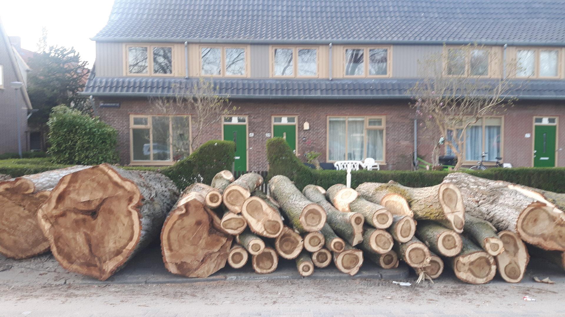 Bomen verdwijnen uit het straatbeeld. (bomenkapmeldpunt.nl, foto: Rotterdam)