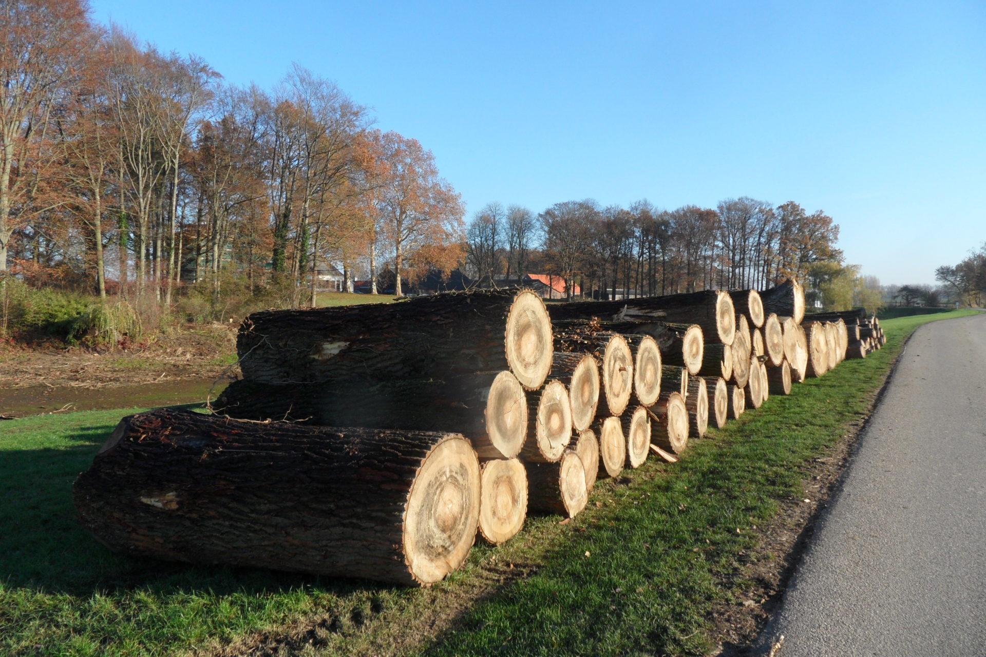 """""""In Brummen noemt men het revitalisering van het landgoed Reuversweerd, ik vind het niet goed voor het land maar noem het gewoon kaalslag."""" (bomenkapmeldpunt.nl)"""