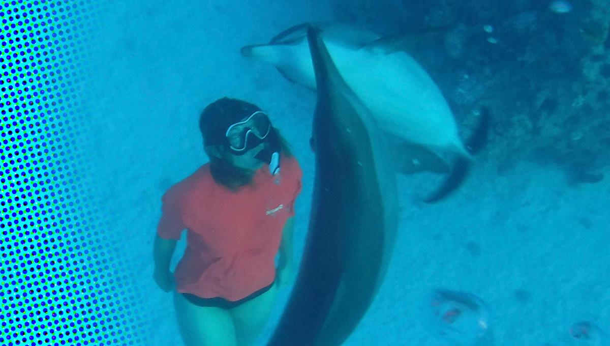 Zwemmen met de dolfijnen in de Rode Zee